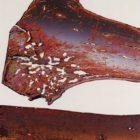dlupp_1994-6.jpg