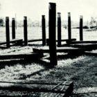 equrna_1983-25.jpg