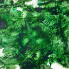 fmzeleni_brljan_1982_640x480.jpg